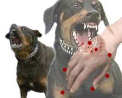 anjing merupakan hewan yang paling banyak menularkan penyakit rabies