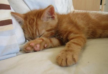 gangguan tidur bisa diatasi dengan beberapa makanan tertentu
