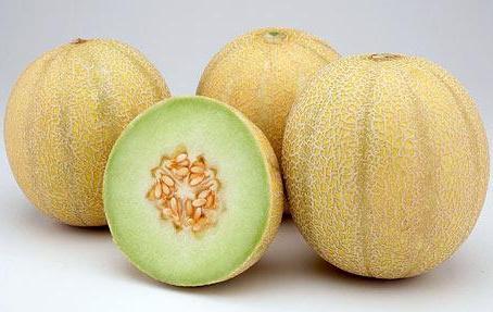 Cara Budidaya Melon