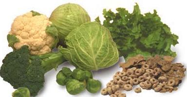 sumber vitamin K banyak terdapat dalam sayuran hijau