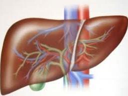 hepatitis menyarang organ yang penting dalam tubuh kita yaitu hati