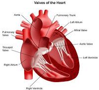 kenali gejala jantung sejak dini