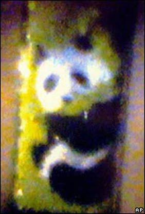 lukisan panda pada sehelai rambut