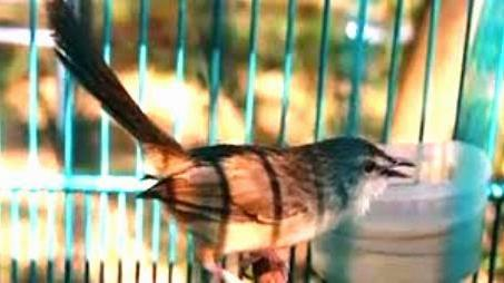 Trik Menjaga Kesehatan Mental Burung