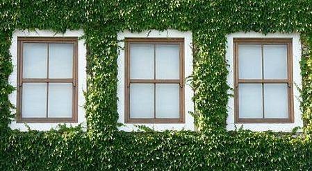 contoh desain jendela untuk rumah bernuansa hijau
